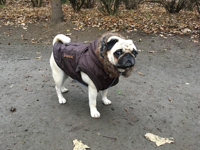 Puppia Pug Cloth