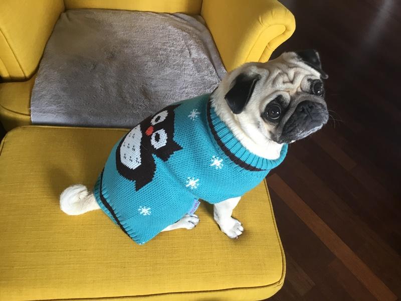 Mops svetr, obleček pro mopse